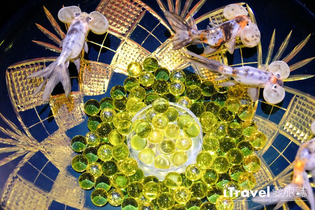 福岡展覽推薦 博多金魚の祭 (50)