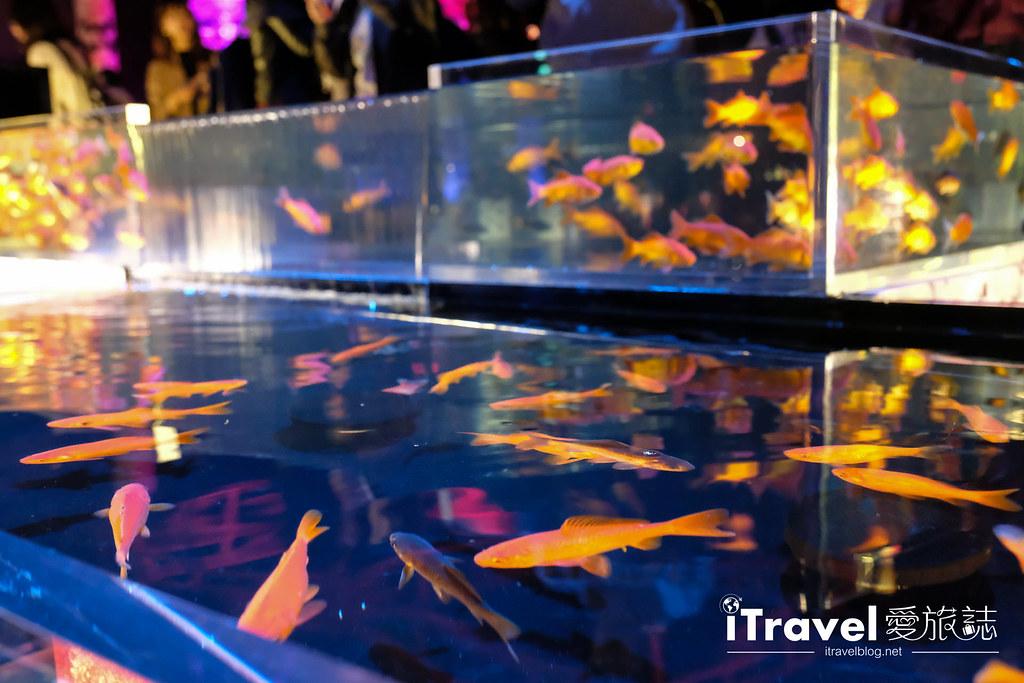福岡展覽推薦 博多金魚の祭 (47)