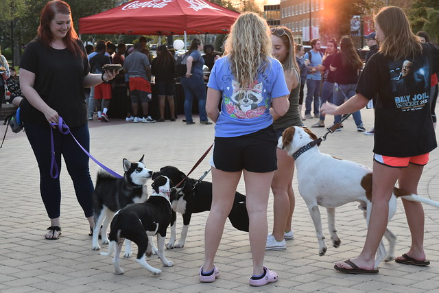 Students and their dogs at the Junior Twilight event