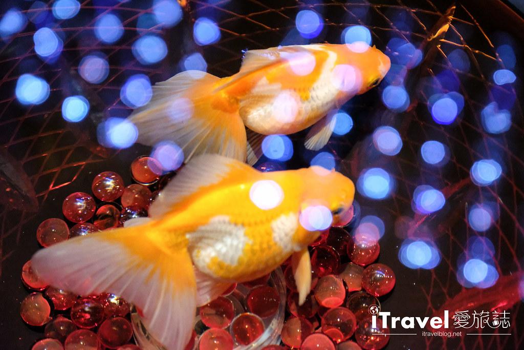 福岡展覽推薦 博多金魚の祭 (55)
