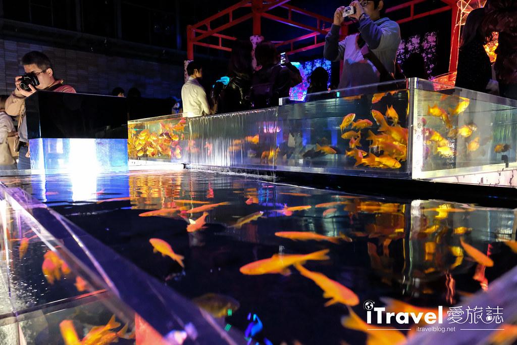 福岡展覽推薦 博多金魚の祭 (46)