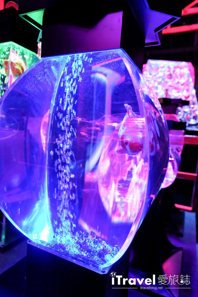 福岡展覽推薦 博多金魚の祭 (37)