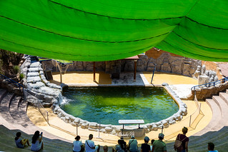 Exibicion Leones Marinos - El Castillo de las Guardas 24-08-19