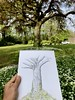 Drawing Ideas Trees