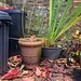 Autumn by the Dustbins