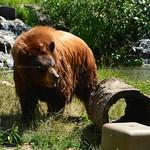 North American Bear Center, International Wolf Center, Ely Pillow Rock, Kawishiwi Falls