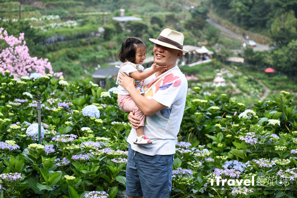 大梯田花卉生態農園 Taipei Hydrangea Terraced Fields (35)