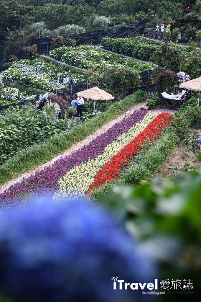 大梯田花卉生態農園 Taipei Hydrangea Terraced Fields (16)