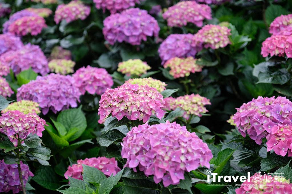 頂湖財福繡球花園 Jai Fu Garden (87)