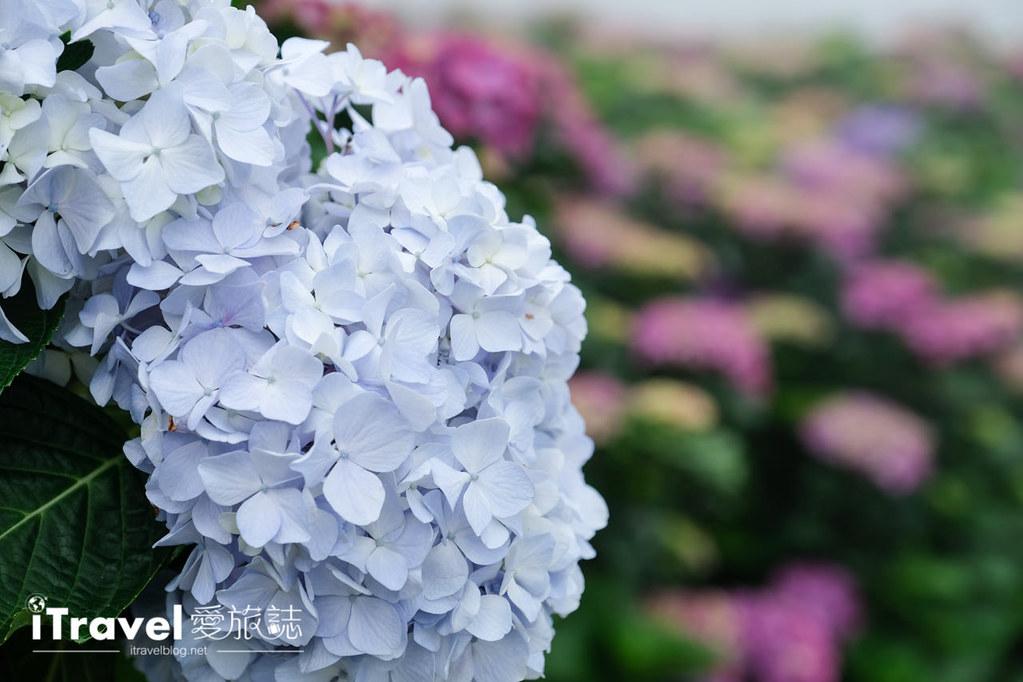 頂湖財福繡球花園 Jai Fu Garden (64)