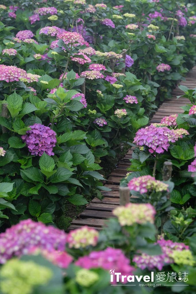 頂湖財福繡球花園 Jai Fu Garden (58)