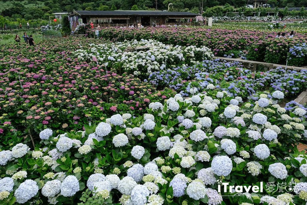 頂湖財福繡球花園 Jai Fu Garden (51)