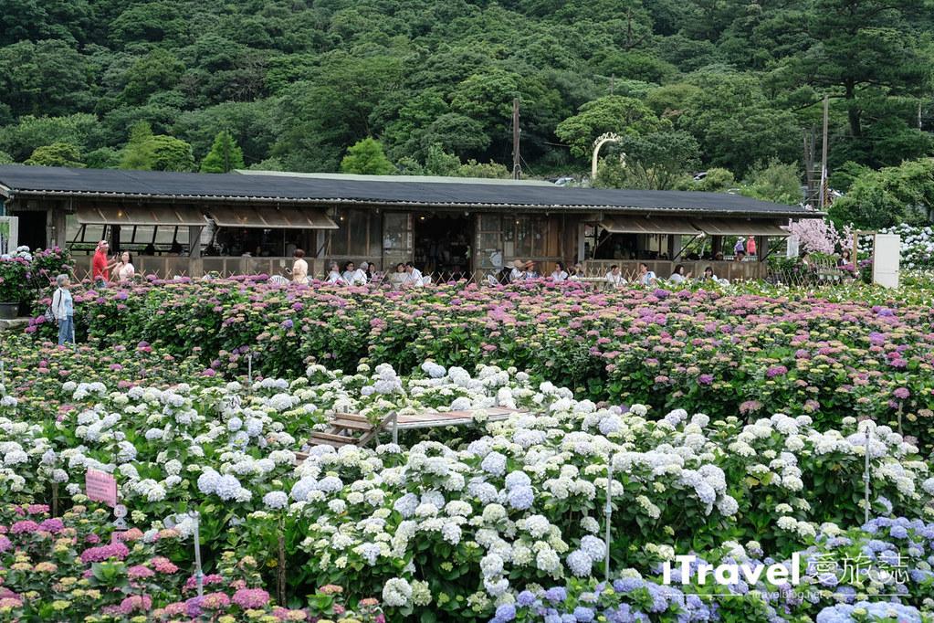 頂湖財福繡球花園 Jai Fu Garden (50)