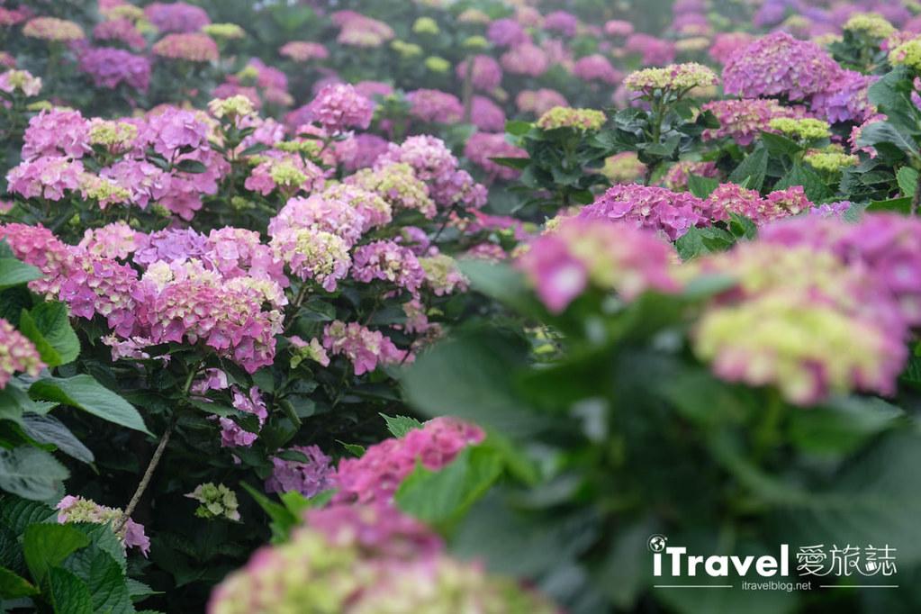 頂湖財福繡球花園 Jai Fu Garden (40)