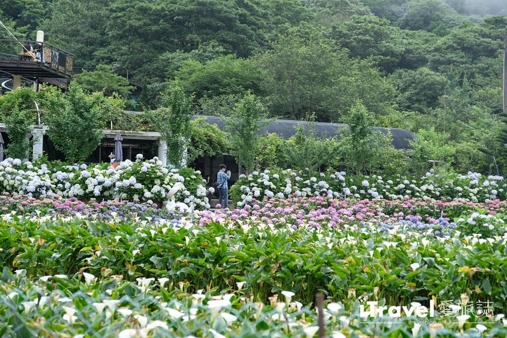 頂湖財福繡球花園 Jai Fu Garden (13)