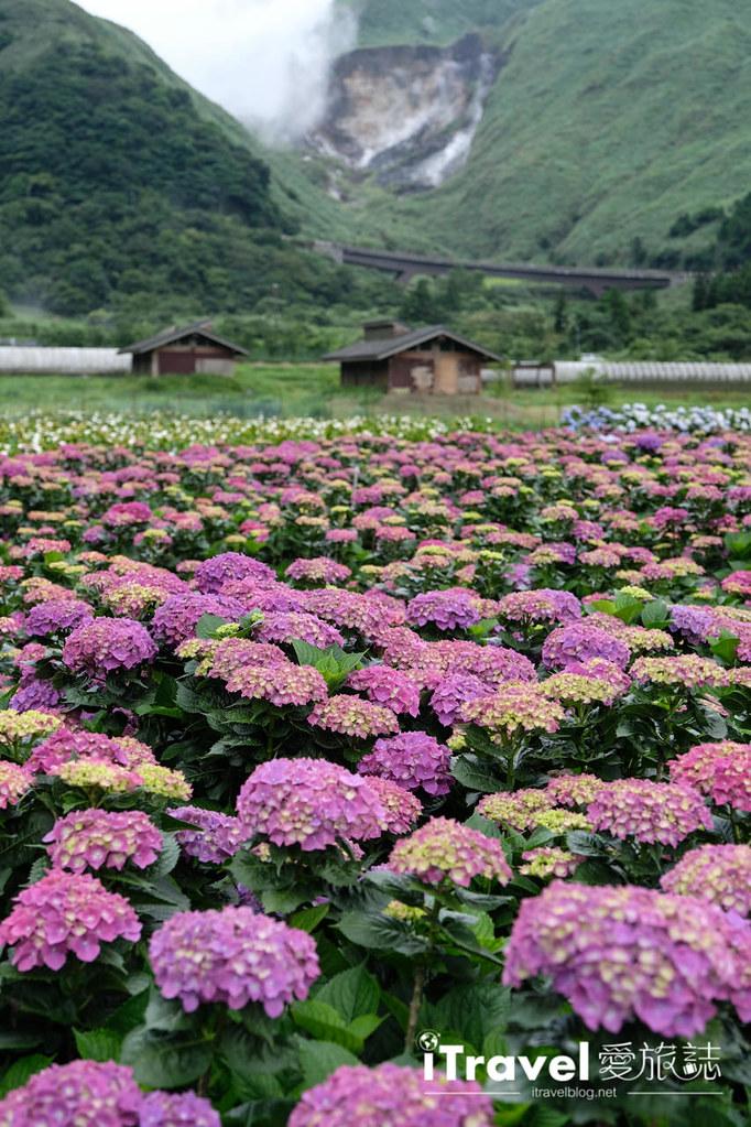 頂湖財福繡球花園 Jai Fu Garden (89)