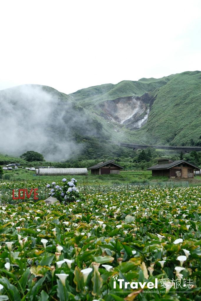 頂湖財福繡球花園 Jai Fu Garden (84)