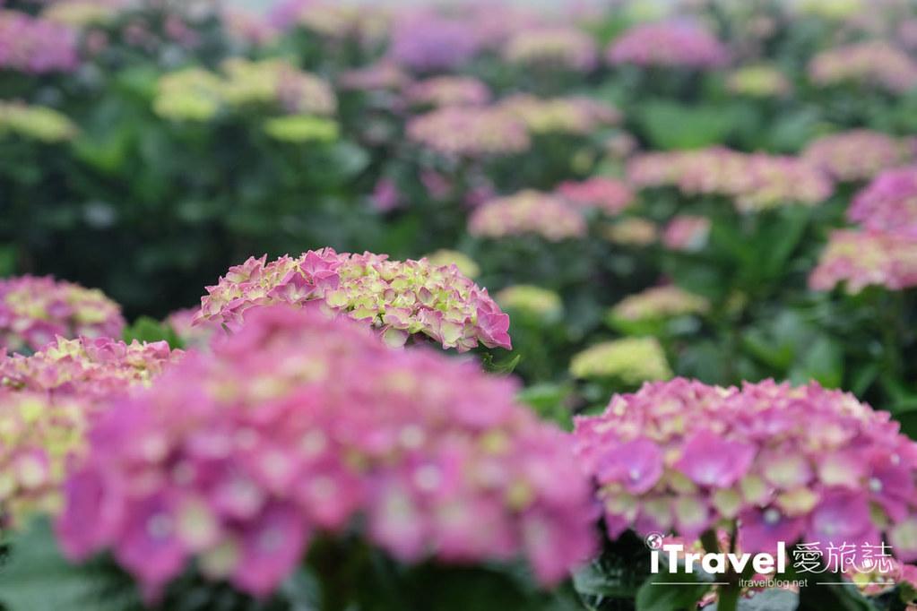 頂湖財福繡球花園 Jai Fu Garden (66)