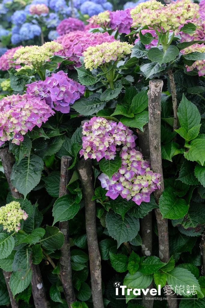 頂湖財福繡球花園 Jai Fu Garden (43)