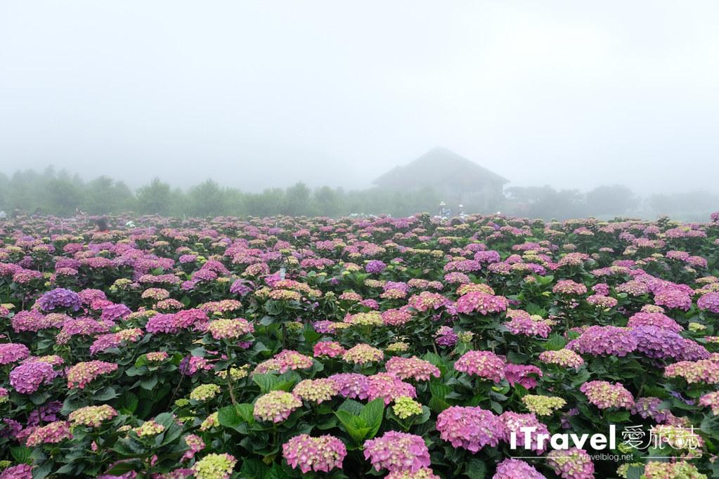 頂湖財福繡球花園 Jai Fu Garden (26)
