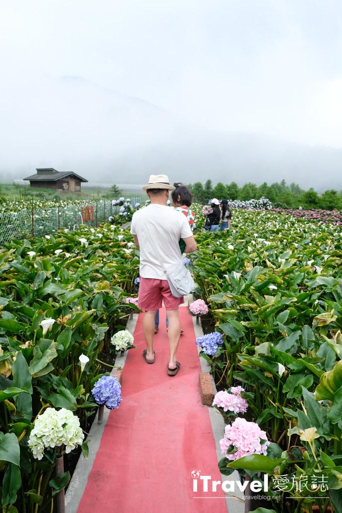 頂湖財福繡球花園 Jai Fu Garden (20)