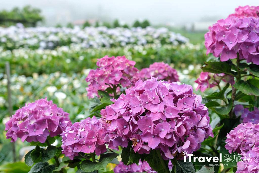 頂湖財福繡球花園 Jai Fu Garden (19)