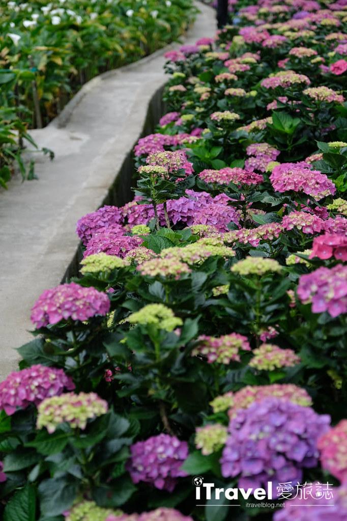 頂湖財福繡球花園 Jai Fu Garden (82)