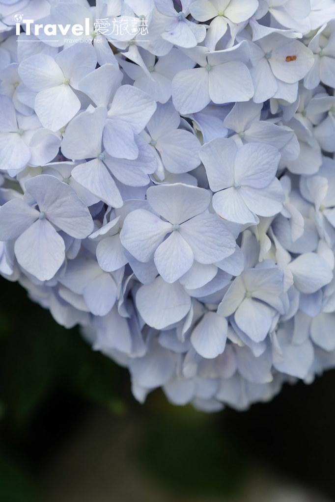 頂湖財福繡球花園 Jai Fu Garden (65)