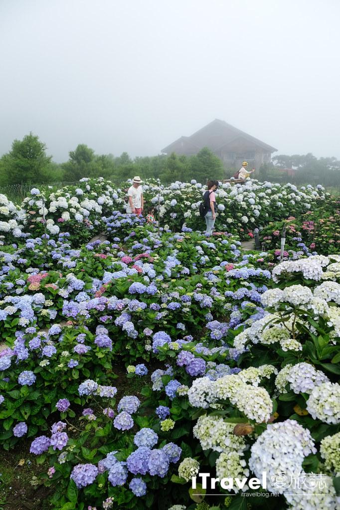 頂湖財福繡球花園 Jai Fu Garden (45)