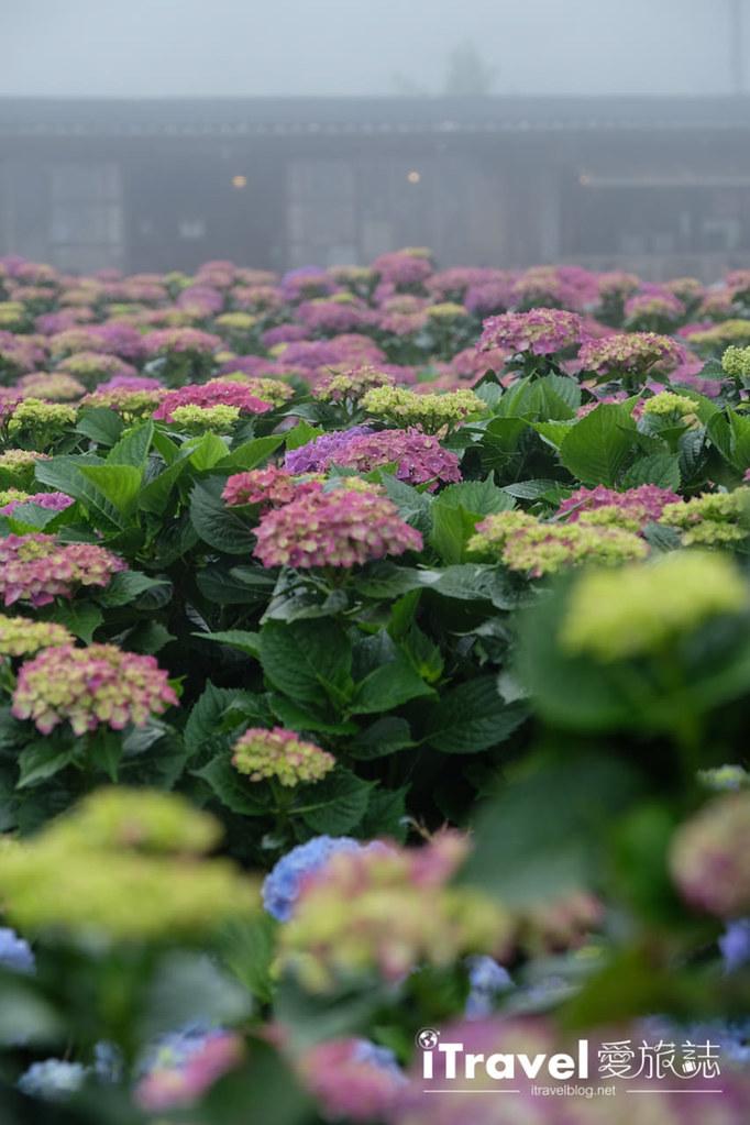 頂湖財福繡球花園 Jai Fu Garden (44)