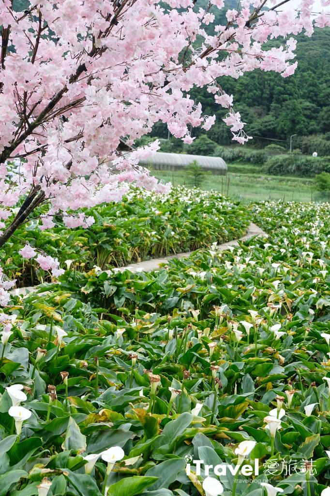 頂湖財福繡球花園 Jai Fu Garden (14)