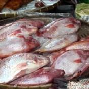 Thailand - Bangkok - Market - Fish - 79