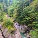 Lingenau: Quelltuff & Drahtseilbrücke 2021 09 19