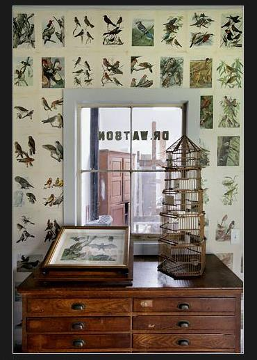 Bird wallpaper: Do it yourself with vintage folio sheets