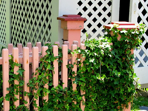 coral fence w/ ivy