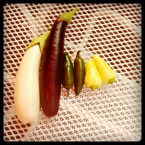 eggplants and hot peppers from the patio garden