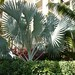Plants @ hotel