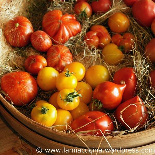 Hämiker Tomaten 1_2011 08 05_5343