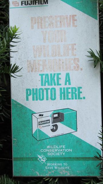 Bronx Zoo - photo prompt