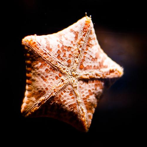 you're a star! by Matt Hovey (on hiatus. back soon!)