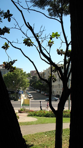 Street seen through a silhouetted tree