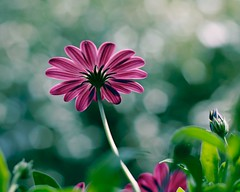 Flower sparkle Flickr Photo credit: @Doug88888