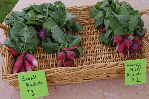 Radishes for sale