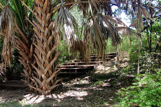 AMOA Laguna Gloria