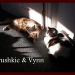 Prushkie and Vynn