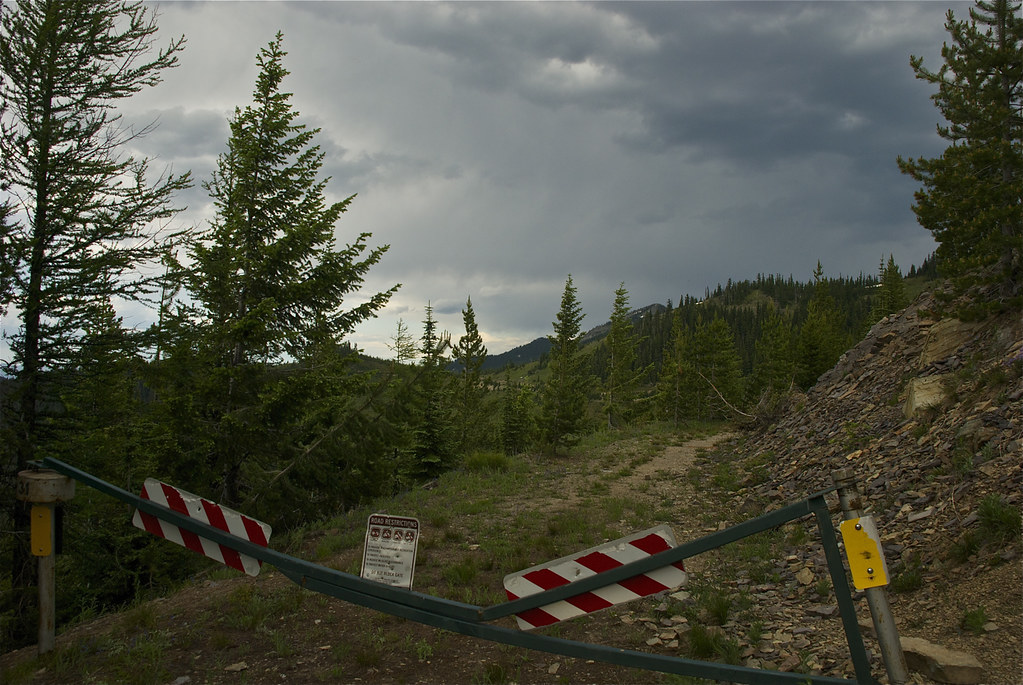 Logging road from Vermilion Pass