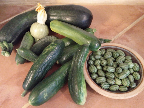 Mini Harvest, July 6th