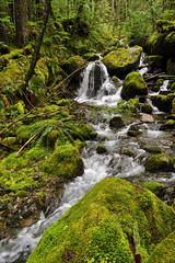 Hydraulic Creek, 8 May 2011