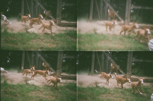 The actionsampler is made for taking puppy photos.