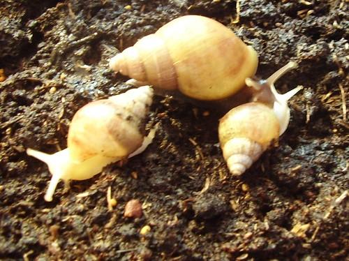 snails 018